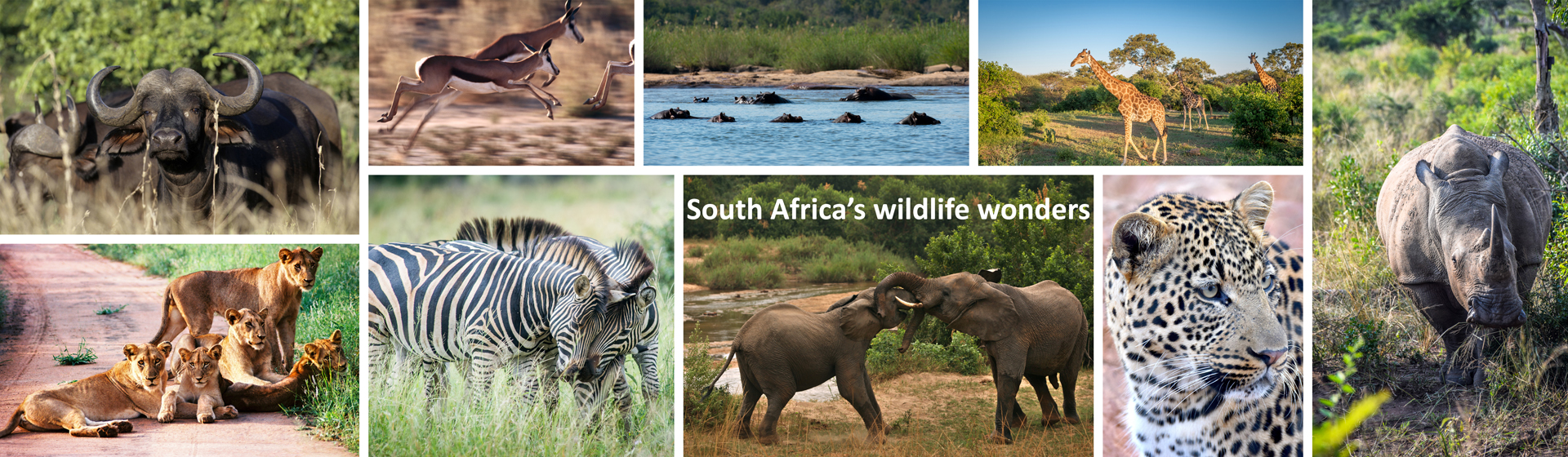 Wildlife wonders in South Africa