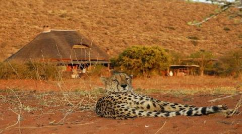 SAFARI LODGES SOUTH AFRICA